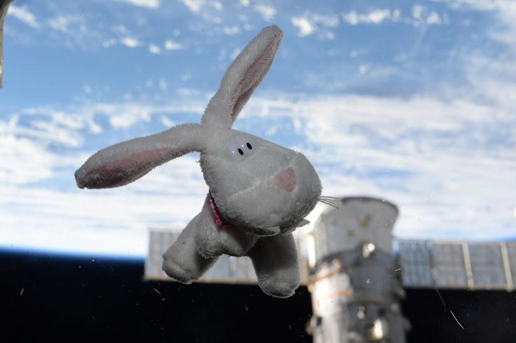 """Honored to share this hare in space! """"The #EasterBunny came to visit! #HappyEaster from #ISS. #YearInSpace"""""""