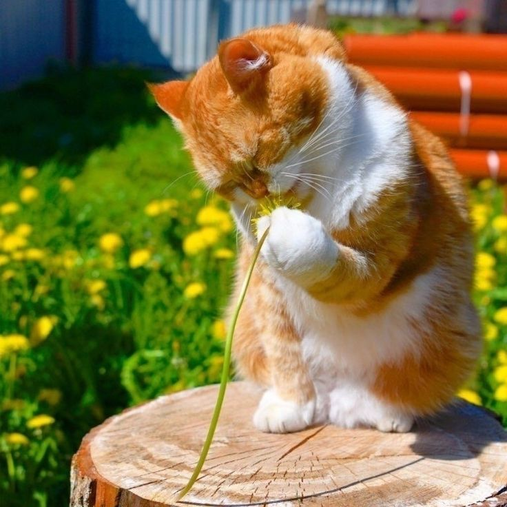 Радостные коты для настроения картинки