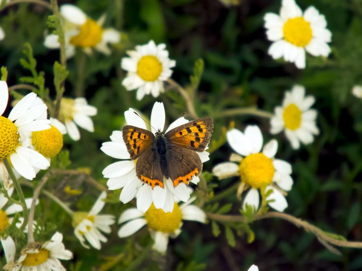 Summer - Summer could not be real without butterfly.