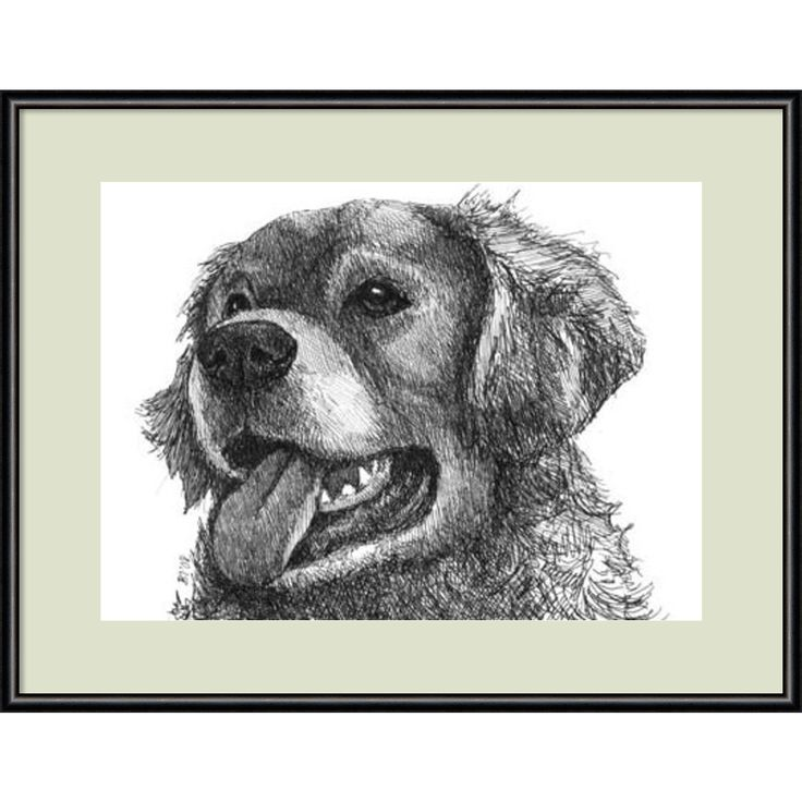 Framed Art Print 'Amber the Golden Retriever Dog' by Beth Thomas 13 x 11-inch