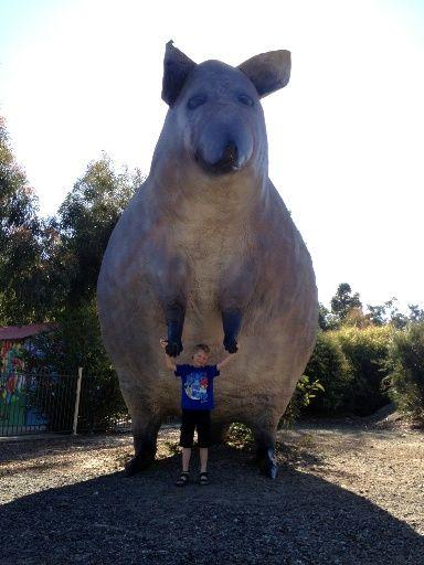 The Big Quokka - Cohunu Koala Park. Perth, Western Australia