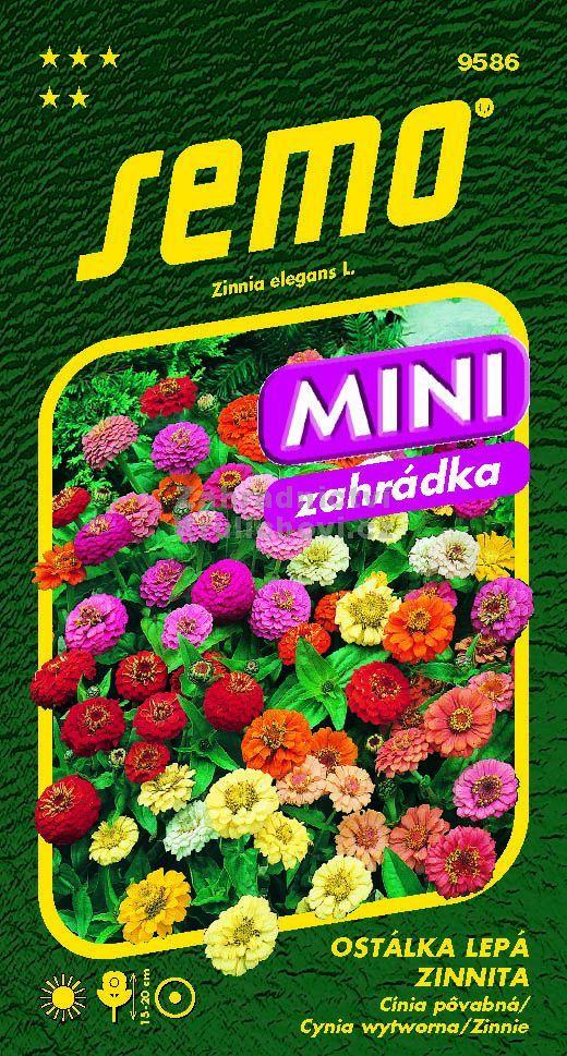 - mini cínie, přirozeně zakrsle rostoucí pomponkovitá ostálka, výška 15-20 cm. Výborná do nádob i na okraje záhonů. Směs barev.