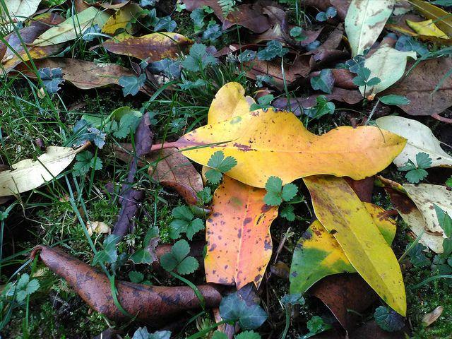 foglie cadute 2 | da decoriciclo