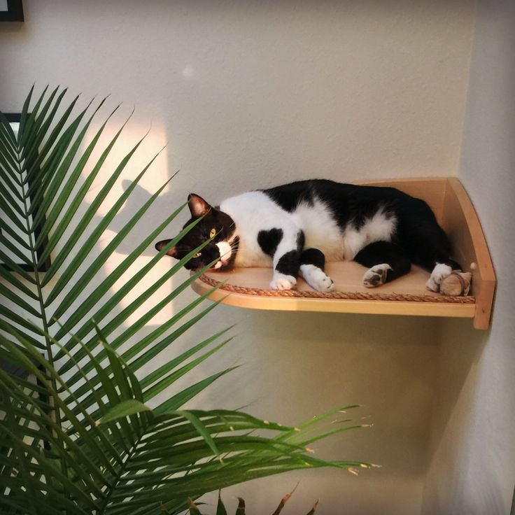 Corner Climber Shelf for Cats - Mountain Cat Climbers by MountainPetProducts on Etsy https://www.etsy.com/listing/94459622/corner-climber-shelf-for-cats-mountain
