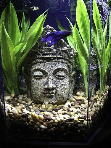 Amazon garcinia cambogia premium photo 2
