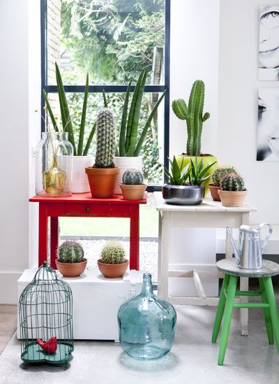 Stools, end tables, bird cage and Cactus in interieur