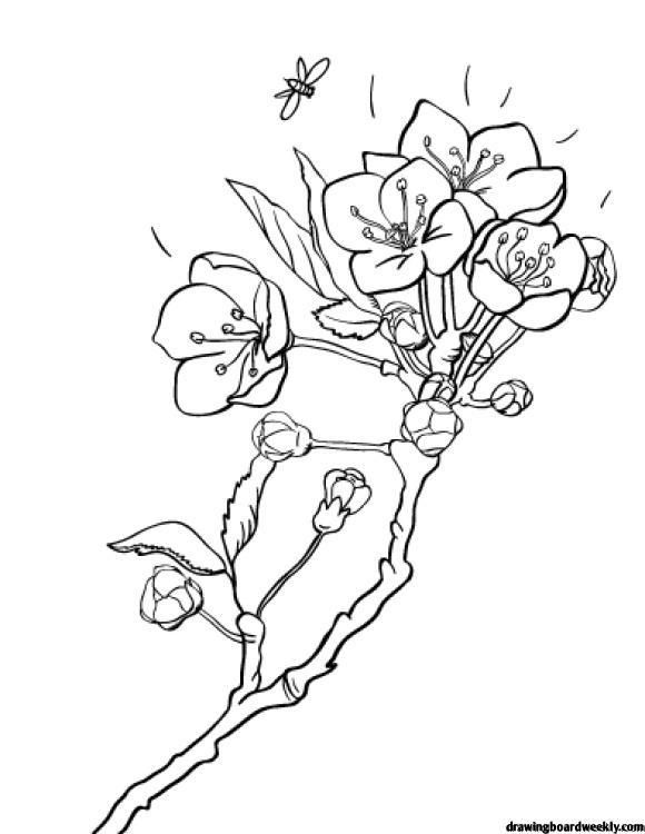 Cherry Blossom Coloring Page In 2020 Monster Coloring Pages