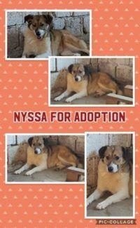 Nyssa for Adoption | Florina's Doggy Rescue House
