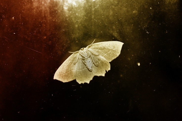 A simple pic of a Moth that I played with in PhotoShop