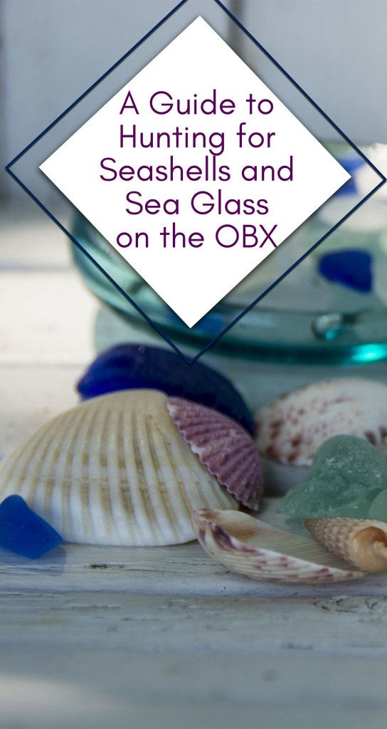 The Outer Banks of North Carolina is one of the best places in the country for Seashell and Sea Glass enthusiast. Here is everything you need to know about the OBX shelling.