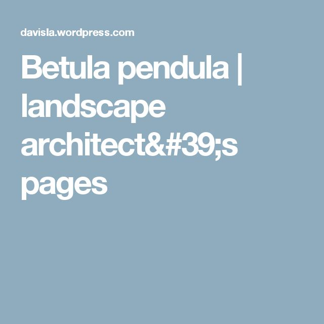 Betula pendula | landscape architect's pages