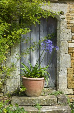 ...love the old door and the pot with one of my favourite plants - agapanthus...<£