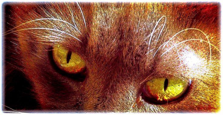 M  o   m   e   n   t   s   b   o   o   k   .   c   o   m: Δυο πράσινα μάτια...