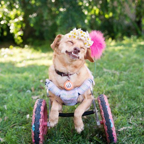 Despite a prominent underbite and a congenital deformity, this dog is proving that animals with special needs are still able to live lives full of love and happiness.