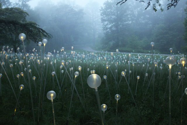 Bruce Munro's LED Installations light up Longwood Gardens