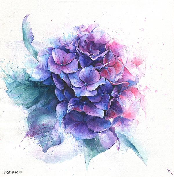 Hydrangea Drawing Watercolor Blue Violet Pink And Purple Flower Bouquet On Wh Blue Bouquet D In 2020 Blue Flower Tattoos Flower Drawing Blue And Purple Flowers