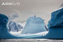Iceberg and mountains on the Antarctic Peninsula