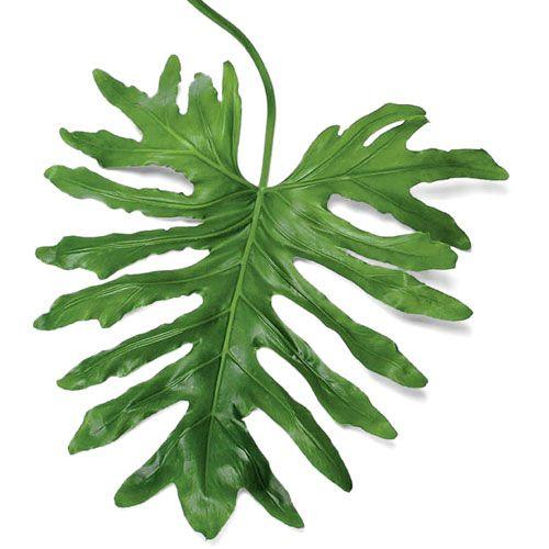 Best 25 large leaf plants ideas on pinterest black for Indoor green plants images