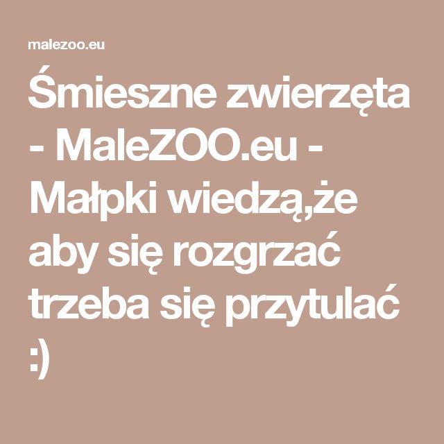 Śmieszne zwierzęta - MaleZOO.eu - Małpki wiedzą,że aby się rozgrzać trzeba się przytulać :)