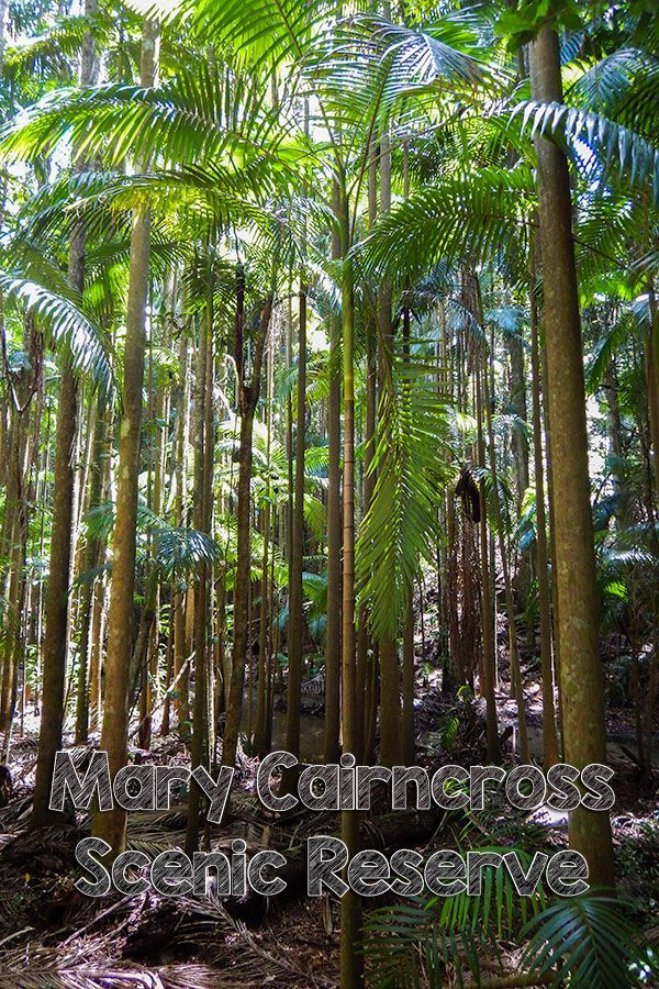 Explore the Mary Cairncross Scenic Reserve on the Sunshine Coast Hinterland, Australia