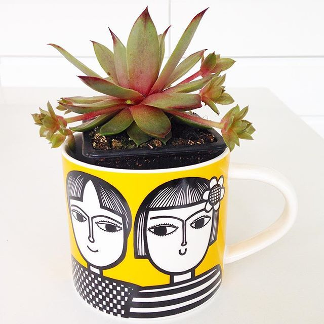 Succulent in my Gemini mug @makeinternational #janefostermug #geminitwins #janefosterzodiac #retromugs #etrohome