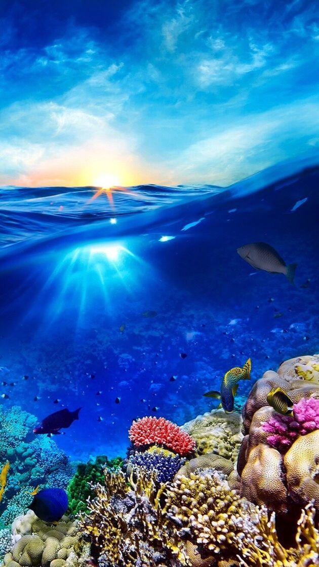 Best 25+ Iphone wallpaper underwater ideas on Pinterest | Android underwater wallpaper, Hd ...