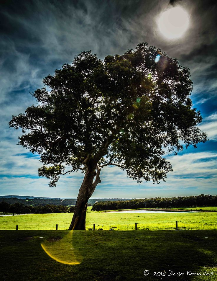 The Lone Tree at Eagle Bay Brewery, Yallingup, Western Australia
