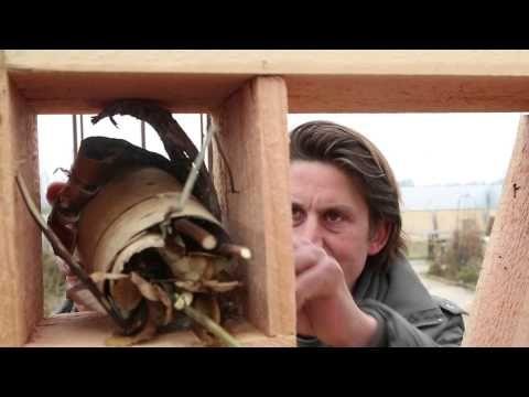 Lodewijk Hoekstra | Praxis. In deze video legt Lodewijk uit hoe je eenvoudig een insectenhotel kunt maken.