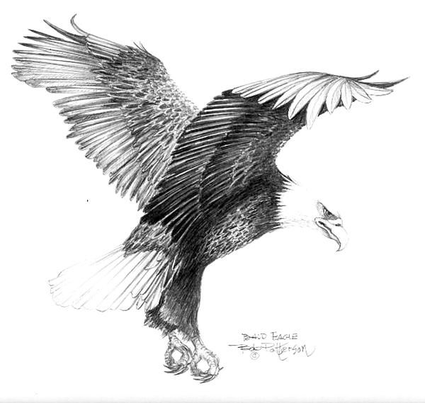 ... Eagle Drawing on Pinterest | Drawings, Drawing Drawing and Bird