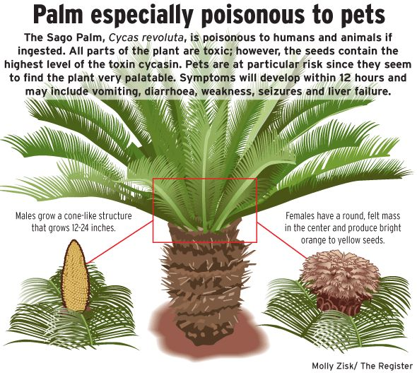 Can Dogs Eat Berries From Palm Trees