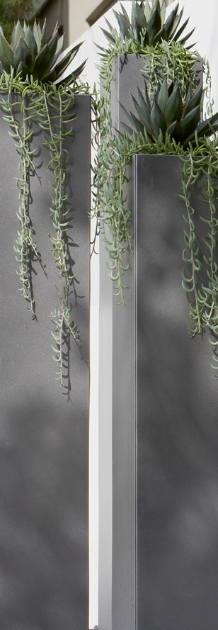 Custom extra tall architectural pedestal planters by Urban Nature filled with Agave 'Blue Glow' and Senecio 'Fish Hooks'.