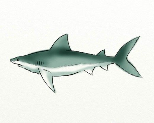 How to draw an awesome shark By Shawnte