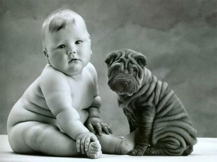 similar :p: Anne Geddes, Shar Pei, Soul Mates, Baby Fat, So Cute, Sharpei, Baby Dogs, Baby Puppies, Weights Loss
