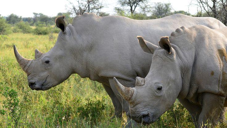 Afrika szafari Botswana utazás - OTP Travel Utazási iroda