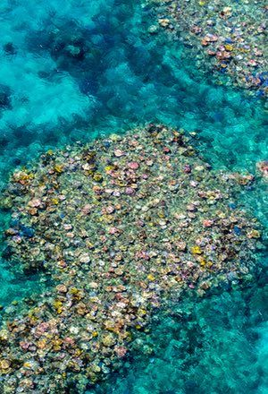 Great Barrier Reef at 'terminal stage': scientists despair at latest coral bleaching data | Environment | The Guardian