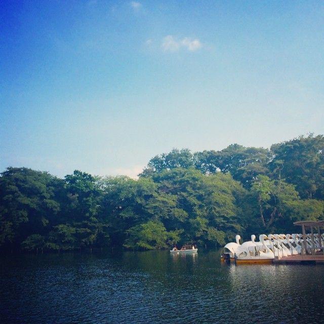 井の頭恩賜公園ではボートもある。自然を楽しめるスポット。井の頭線のおすすめスポット