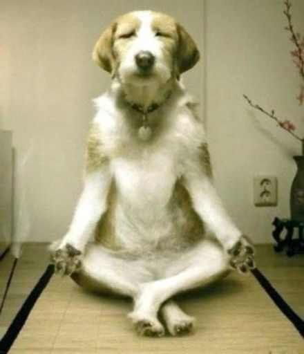 Meditating Dog :-)