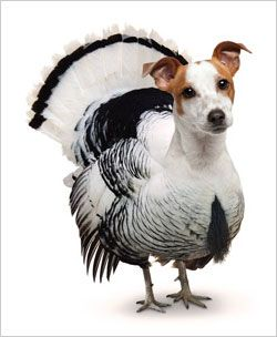 thanksgiving dog pictures | PETA's Dog-Turkey Protests Thanksgiving Slaughter This creature could ...
