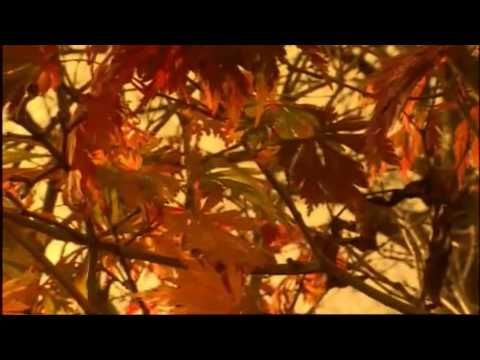 From School Library Journal, a video of foliage photos set to Vivaldi's Autumn, from the Four Seasons