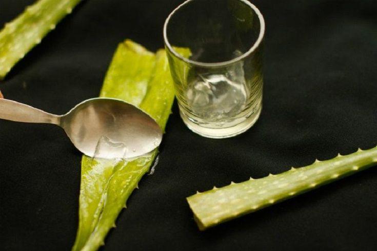 Aloe Vera Nasil Kullanilir Aloe Vera Nasil Kullanilir Aloe Vera