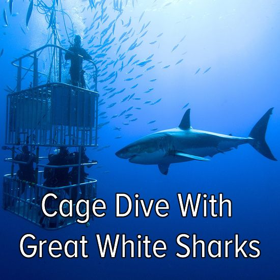 DONE IT!!!! Bucket list: cage dive with Great White Sharks! @karab37 @evelasqu @ecooper1993 @kellifroland