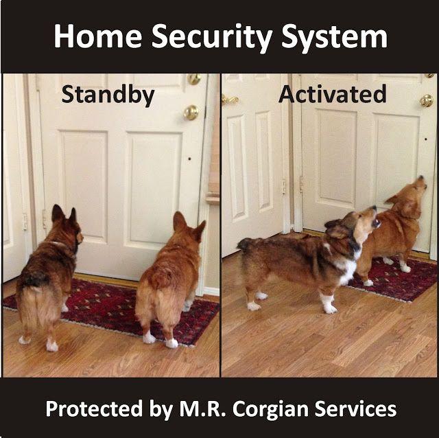The Daily Corgi: Corgi Home Security Squad: Max and Rosie