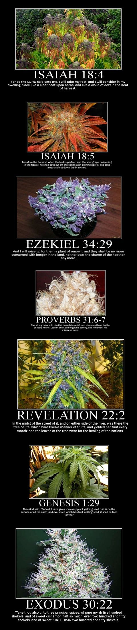 Reerencias de la biblia y mariguana