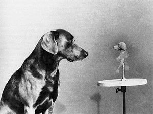 by Wegman 1982 in the style of  1920s surrealist Man Ray, whom the dog is named after.