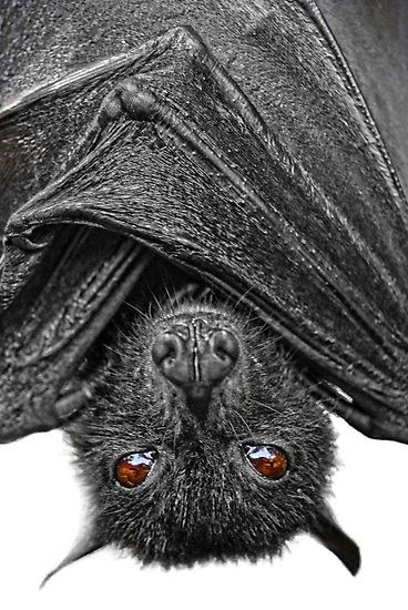 89 Best Bats Images On Pinterest Bats Baseball Art And