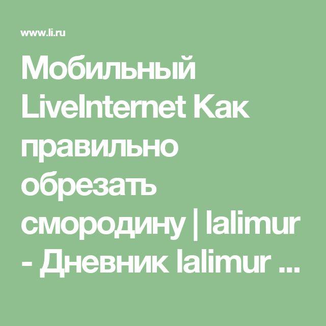 Мобильный LiveInternet Как правильно обрезать смородину | lalimur - Дневник lalimur (Марина Манукова) |