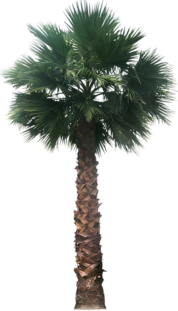 Transparent Palm Tree Great looking desert plants