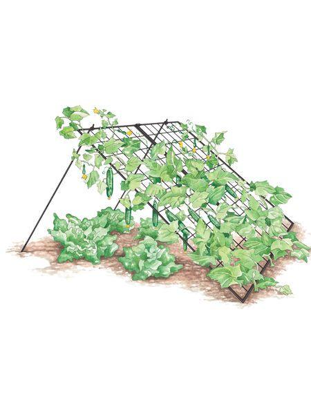 Cucumber Trellis – Large   Powder Coated Steel   Gardener's Supply