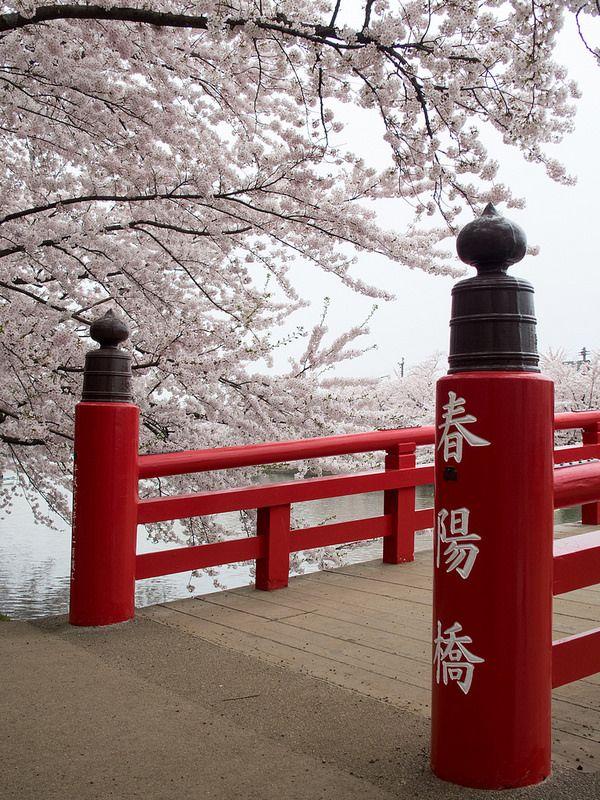 West Bridge, Cherry blossoms, Hirosaki Castle, Japan