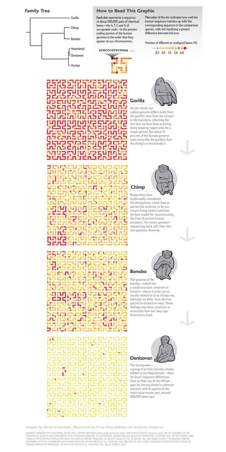 A comparison between math and chess